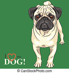 vector, pug, schets, rashond dog, serieuze , fawn