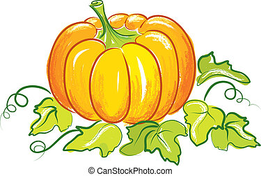 vector pumpkin vegetable fruit isolated on white background
