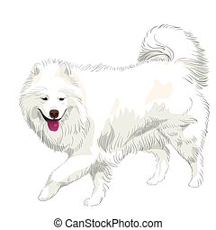 vector purebred Samoyed dog smile - fluffy white Samoyed dog...