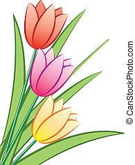 vector, ramo, tulipanes
