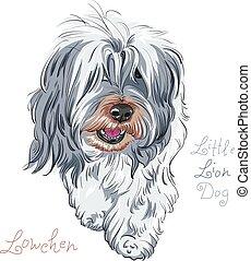 vector, ras, dog, lowchen
