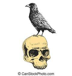 Vector raven on the skull