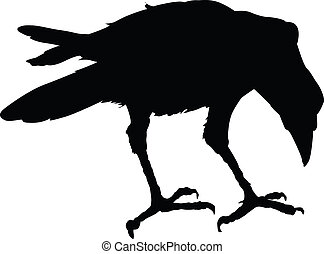 Vector raven   - Raven silhouette