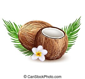 Vector realistic coconut exotic leaves fruit 3d