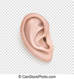Vector realistic human ear icon closeup isolated on...