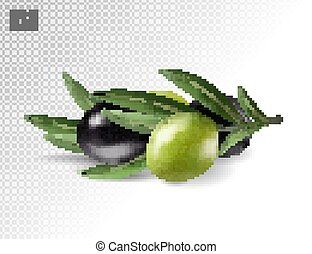 Vector realistic illustration of olives branch isolated on white background. 3d