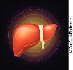 Vector realistic liver illustration