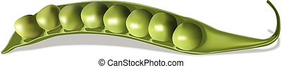 Vector realistic peas on white background.