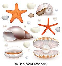 Vector realistic seashell and starfish icon set