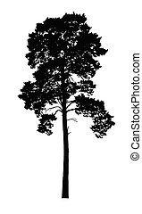 Vector realistic silhouette of coniferous tree isolated