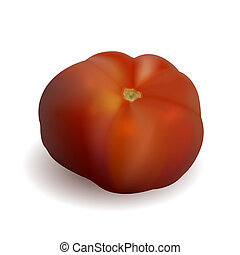 Vector realistic tomato isolated on white. Eps10