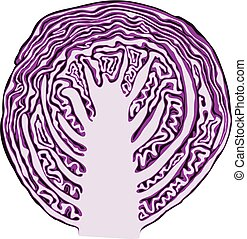 vector red cabbage cut isolated on white background. fresh purple cabbage vegetable for healthy vegetarian diet