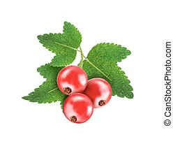 vector red currant isolated on a white background