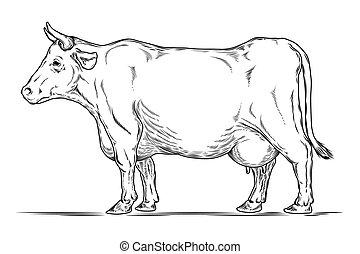 Vector retro illustration of a cow.