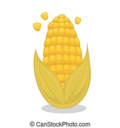 Vector Ripe corn on the cob. Cartoon illustration