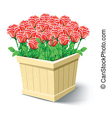 vector rose flowers in box isolated on white background