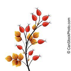 Vector rose hip - Vector illustration rose hip, colorful...