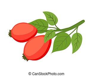 Vector rose hip, haw, medical herbal plant. Cartoon flat style