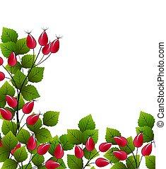 Vector rose hip