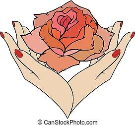 Vector rose in female hands