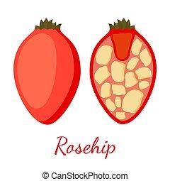 Vector rosehip, seeds, haw, medical herbal plant. Cartoon flat style