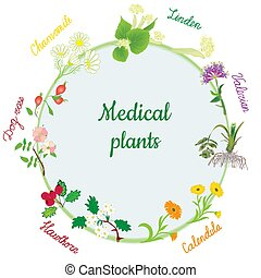 Vector round banner with healing medical plants of chamomile, calendula, dog rose, valerian, linden, hawthorn