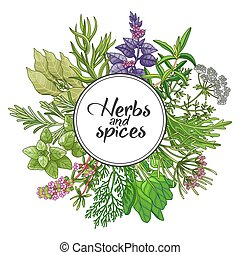 Vector round design with type, spices and herbs - Vector ...