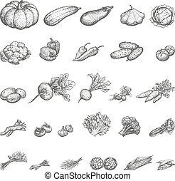 vector, schets, set, groentes, illustratie