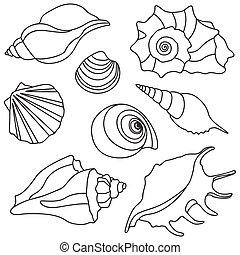 Vector sea shells. Summer holidays design elements.