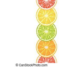 vector seamless border from citrus slices - lime, grapefruit, lemon, orange. Citrus background