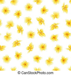 Vector seamless pattern with flower of Plumeria or Frangipani on the white