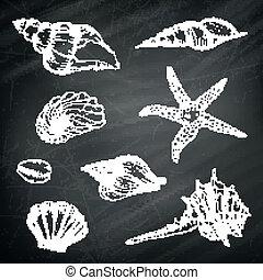 Vector Seashells on a Chalkboard Background