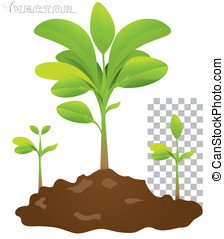 seedling - vector seedling