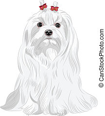 vector serious white dog Maltese breed sitting