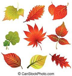 Vector set 2 of colorful autumn leafs design elements....