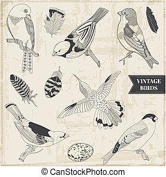 Vector Set: Calligraphic Hand drawn Birds - for design and scrapbook - in vector