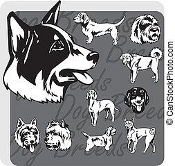 vector, set, -, dog, fokken