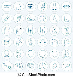 body parts - Vector set icons of human body parts