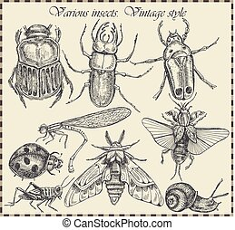 vector set insects in vintage style - Vector