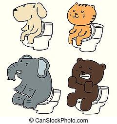 vector set of animal using flush toilet
