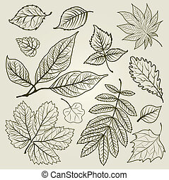Vector set of autumn leafs illustration - design elements. Thanksgiving