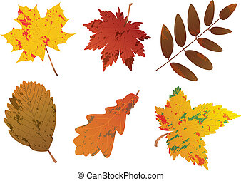 vector set of autumn leaves