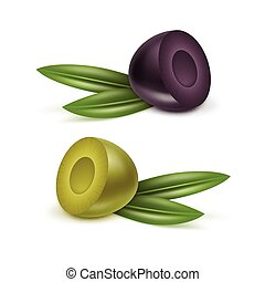 Vector Set of Black and Green Olives Branches with Leaves