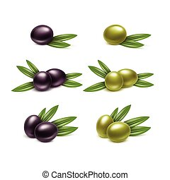 Vector Set of Black and Green Olives Branches with Leaves Isolated on White Background