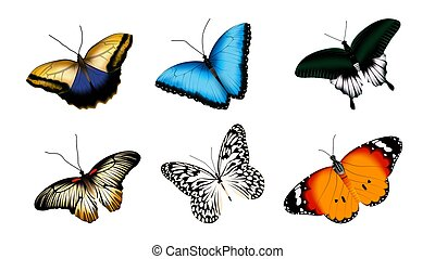Vector set of butterflies. Realistic illustration isolated on white background