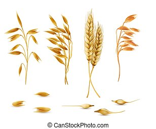 Vector set of cereal plants for package design