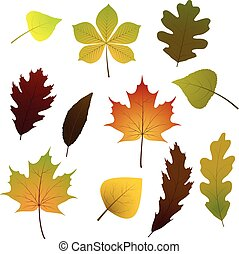 Vector set of colorful autumn leaves. Isolated on white background.