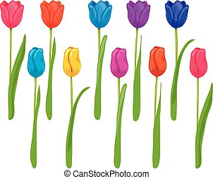 vector set of colorful tulips