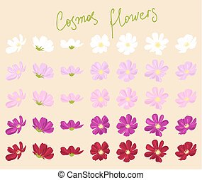 vector set of cosmos flowers