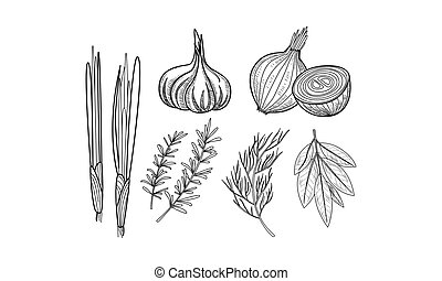 Vector set of culinary herbs and spices. Fresh onion, garlic, bay leaves, rosemary and dill in sketch style